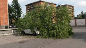 albero_caduto_bruzzano_piazzale_mercato