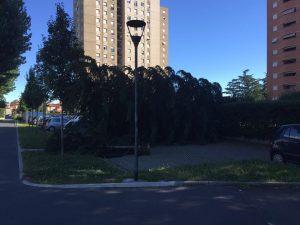albero caduto in via grassini